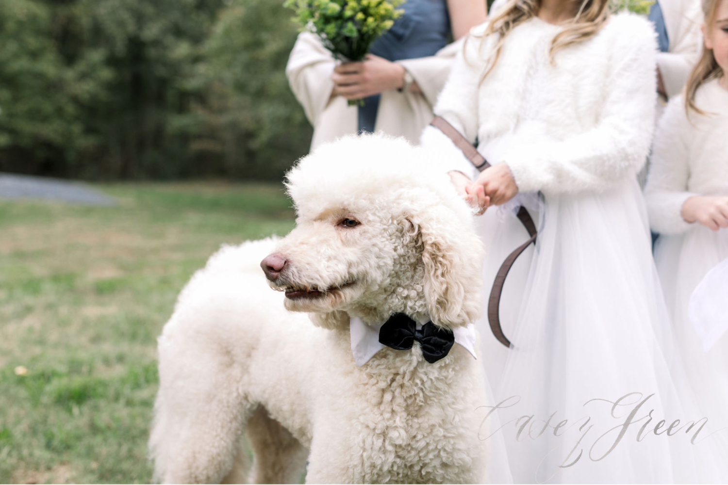 How to incorporate your dog in your wedding day